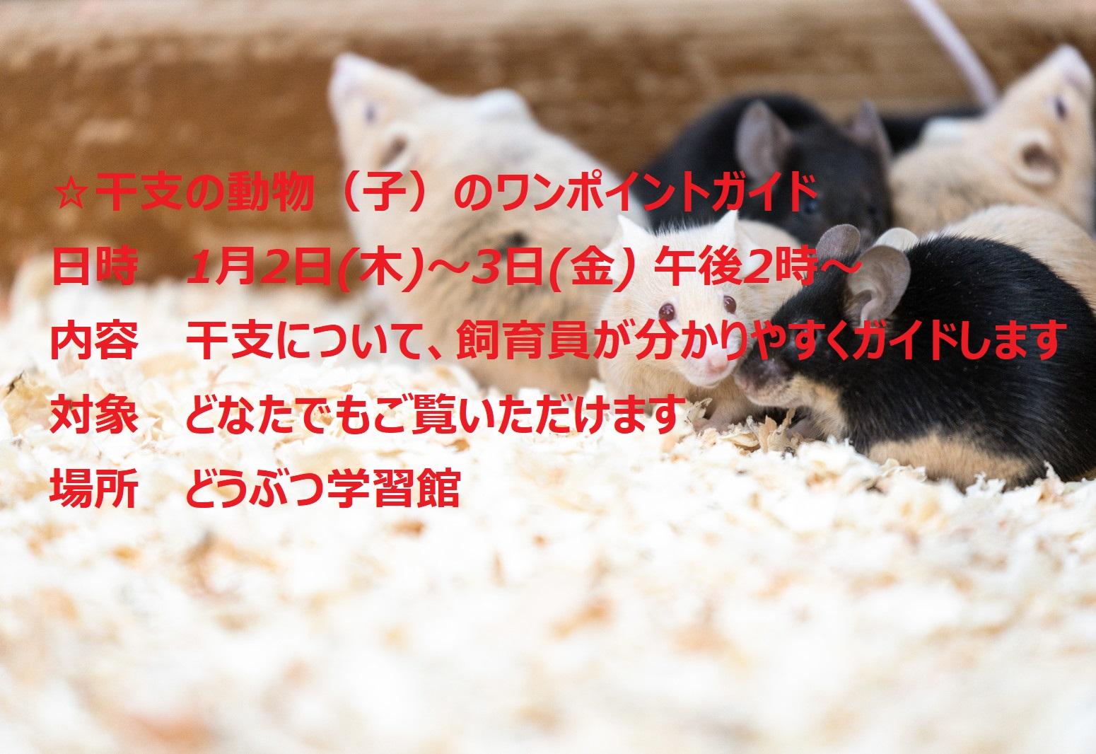 令和2年平川動物公園「お正月まつり」 令和2年1月2日(木)から1月13日(月・祝)まで開催 イメージ画像