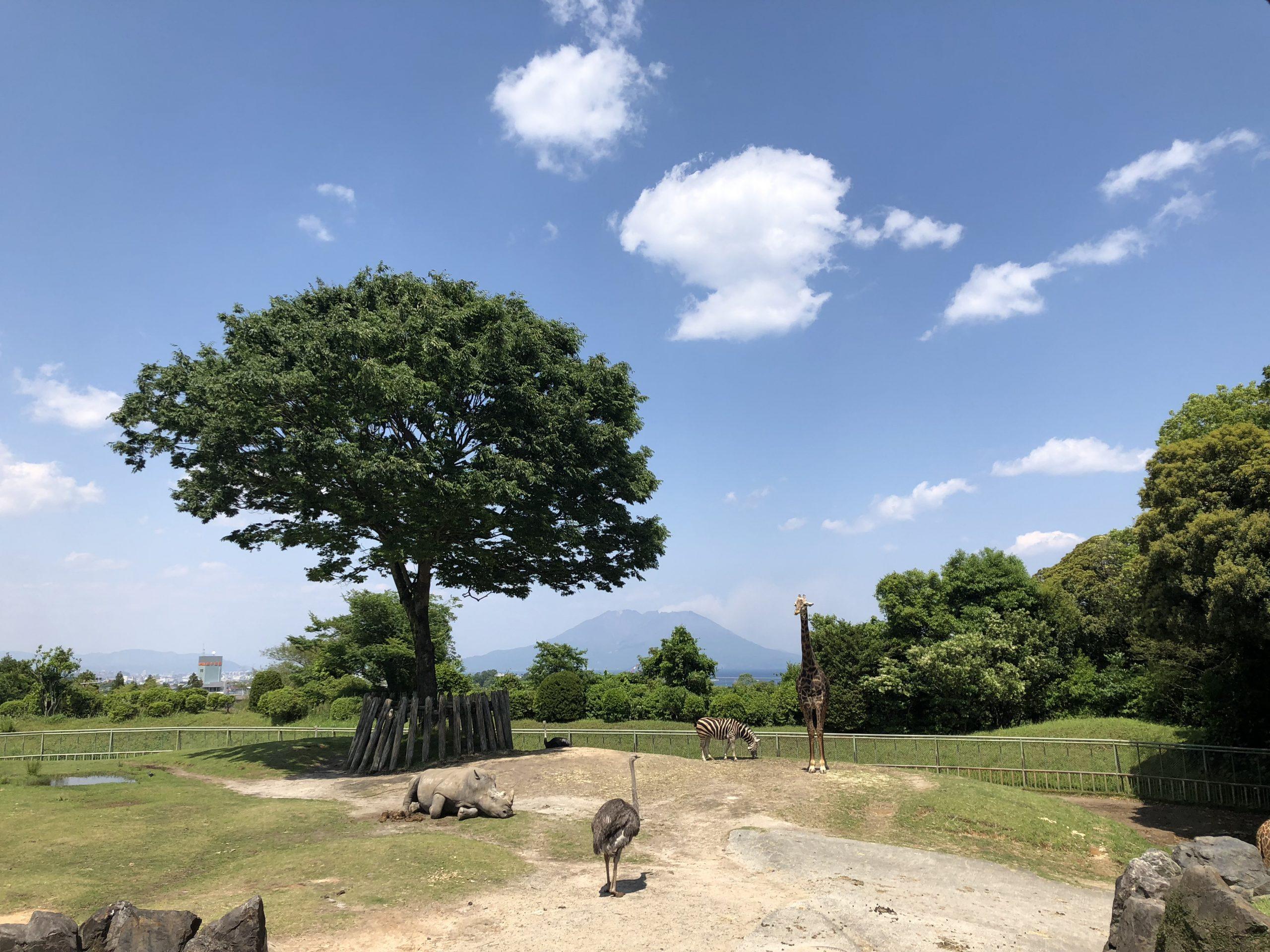 今年の夜の平川動物公園は事前の申し込みが必要! 申込締切  7月27日(月)必着! イメージ画像